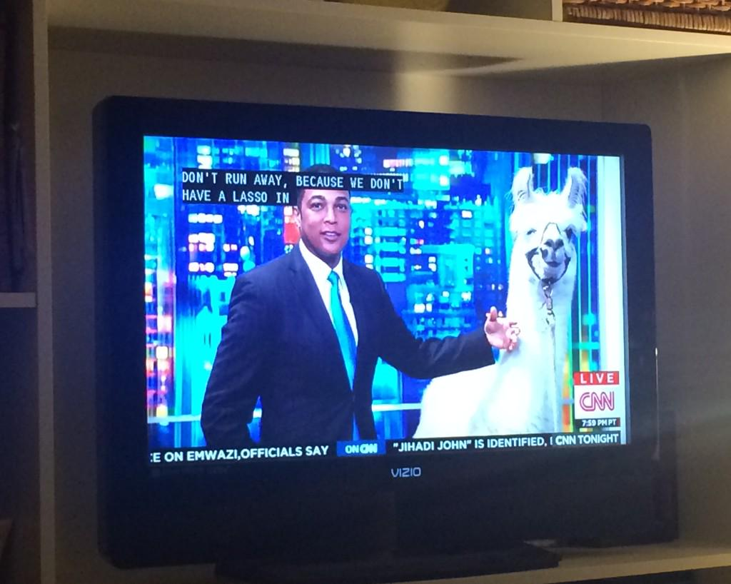 CNN Interviews A Celebrity Llama Named Pierre On Live TV