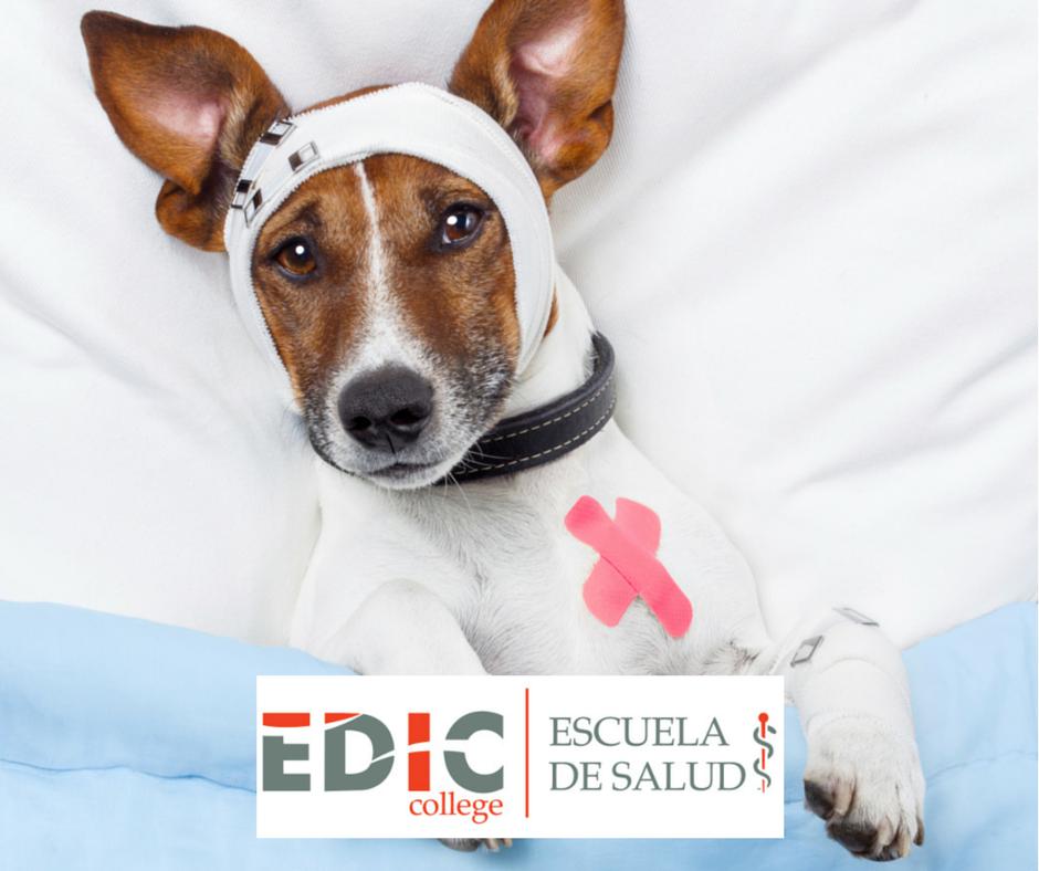 EDIC College on Twitter: \