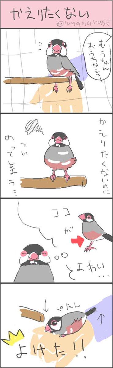 むうちゃんまんが。伝わるといいな>< #buncho #文鳥 http://t.co/Xwb0KIjAmN