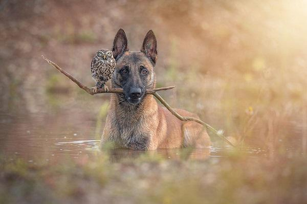 信じられないほど仲良しな犬とフクロウ。 仲良し度数もすごいけれど、写真も絵本のように幻想的に見える。 http://t.co/bMaxOX4UPp http://t.co/oiz4YFPuPq