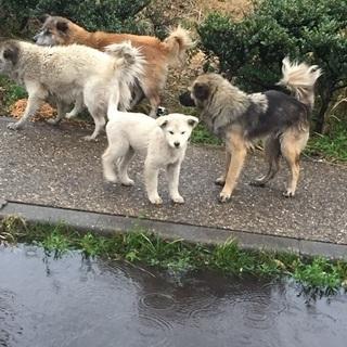 20日まで RT @NakayoshiUme  #里親募集 #茨城県 捕獲され殺処分されてしまいます、助けてください!元飼い主に公園に捨てられました。公園に住みついている成犬4匹里親募集!http://t.co/AUiB6gs1Ap http://t.co/MJuihQMDNL