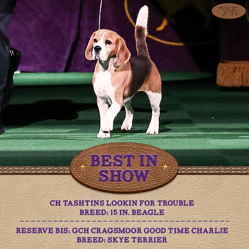 "Best in Show of the 139th Westminster Kennel Club Dog Show is ""Miss P"" the 15 in. #Beagle! #WKCDogShow http://t.co/IYBqOWGHZA"