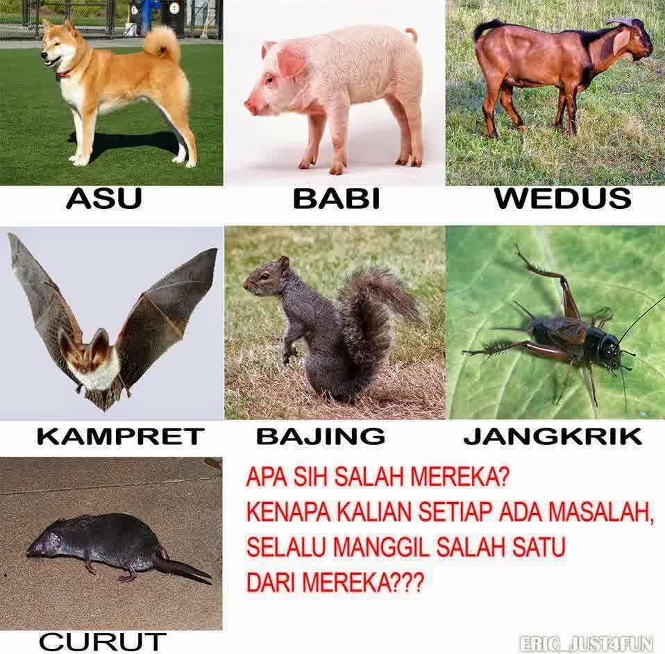 100 Gambar Babi Meme HD