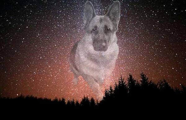 #TheAviators #Angels forming inspiration by @MundarePeggy @lucky_GSD was the OTRB of @Reine1Reine pic by @ToddyFur http://t.co/LLoxaUeE6t