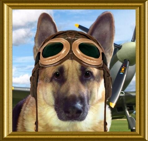Capt @Reine1Reine actively flies #TheAviators #Angels from the Rainbow Bridge. @lucky_GSD @MundarePeggy @ToddyFur http://t.co/BY89vSLPOe
