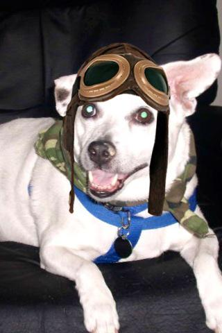 MT @AviatorBuddy: Happy 1st Anniversary #TheAviators #Angels, my privilege to serve from Rainbow Bridge. Capt Buddy http://t.co/ltWDeR8qks