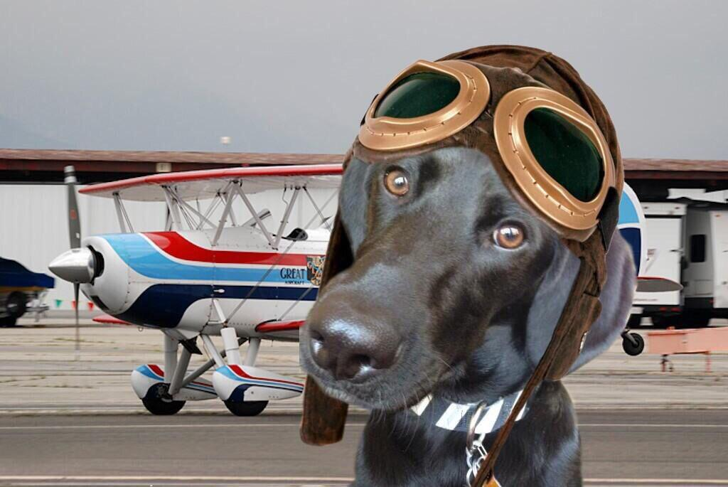 RT @FinnDogSays: #TheAviators #Angels Happy 1st Anniversary ♥️ So proud to fly with you 🐾 Thank you all! http://t.co/SCsfDJ6IpL