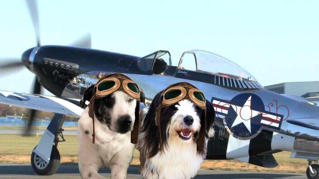 Happy 1st anniversary #theaviators #angels  Honored to fly with so many wonderful fur-pilots and their staff. 🎈🐾🐾🐾🐾🎈 http://t.co/wQ60LIH3MN