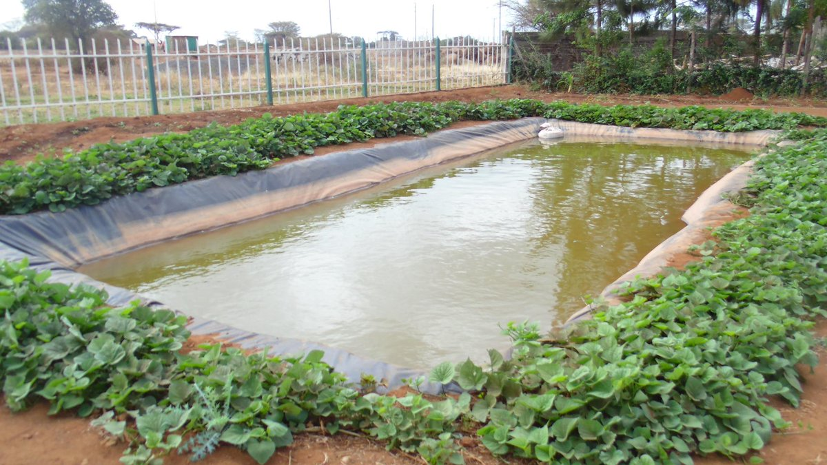 Amiran kenya on twitter farmingiscool amiran dam liners for How to build a fish pond with a liner