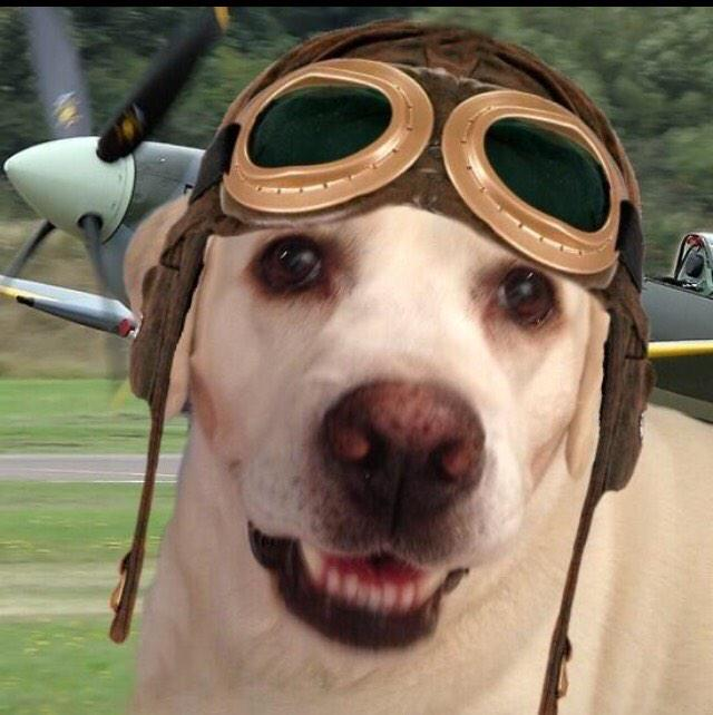 RT @7trekky: Happy 1st anniversary to #TheAviators #Angels ❤️ It has been an honor flying with you❤️🐾 http://t.co/KIsJuh0jS3