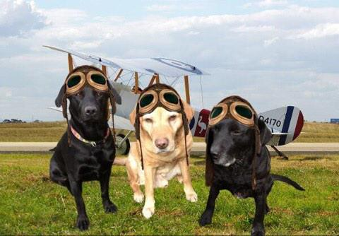 @theaviatorsclub @FinnDogSays @ToddyFur @MundarePeggy & a Very Happy Anniversary frm us &scribe #TheAviators #Angels http://t.co/DvatOImWnq