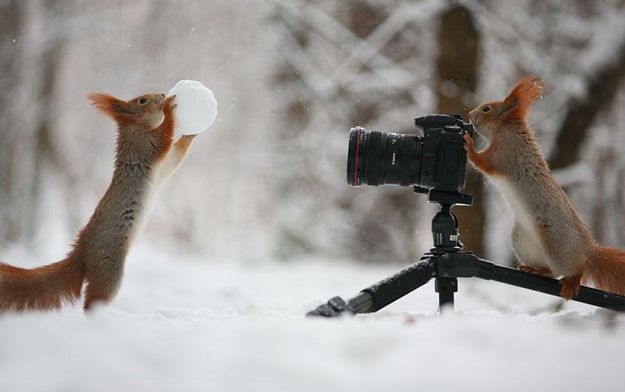 かわいいようかわいいよう RT @kurodamasa: ロシアの写真家Vadim Trunovの作品。凄く楽しげな写真だが、実は雪球の中に木の実が仕込んであるらしい。納得!https://t.co/EjrFh9W8GD http://t.co/MkZs5FRhBY