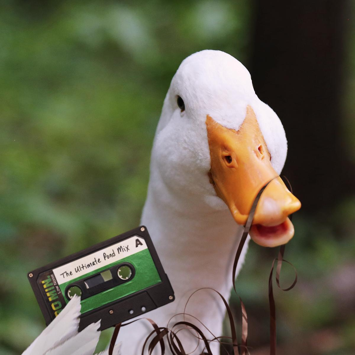 Here goes nothing! I'm making my very own mix tape. Then I need to find a cassette player. #TBT #DuckLife http://t.co/FUS1TSv3QN