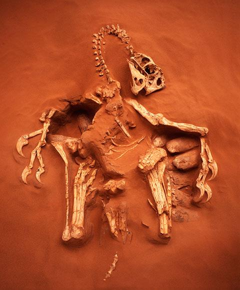 """""""@newscientist: Caught in the act: The seven most revealing fossils ever found  http://t.co/b6TtIGKweJ http://t.co/6TW7MtLVnu"""" #mccol2"""