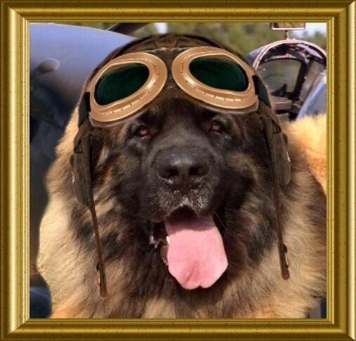@theaviatorsclub  I am proud to be a member of the #Angels  Everybody does a perfect job #TheAviators http://t.co/P8VtQFE6i7