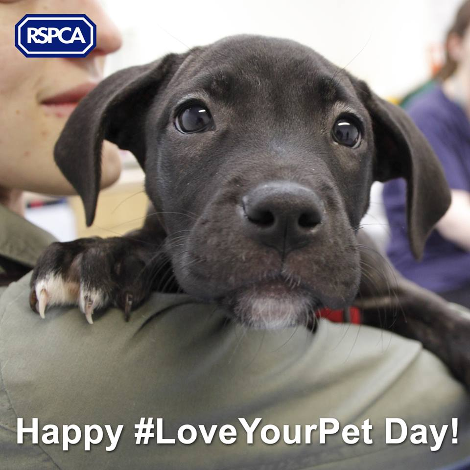 Happy #LoveYourPetDay everyone! We hope you show your pets love everyday :) http://t.co/kuBedznfXw