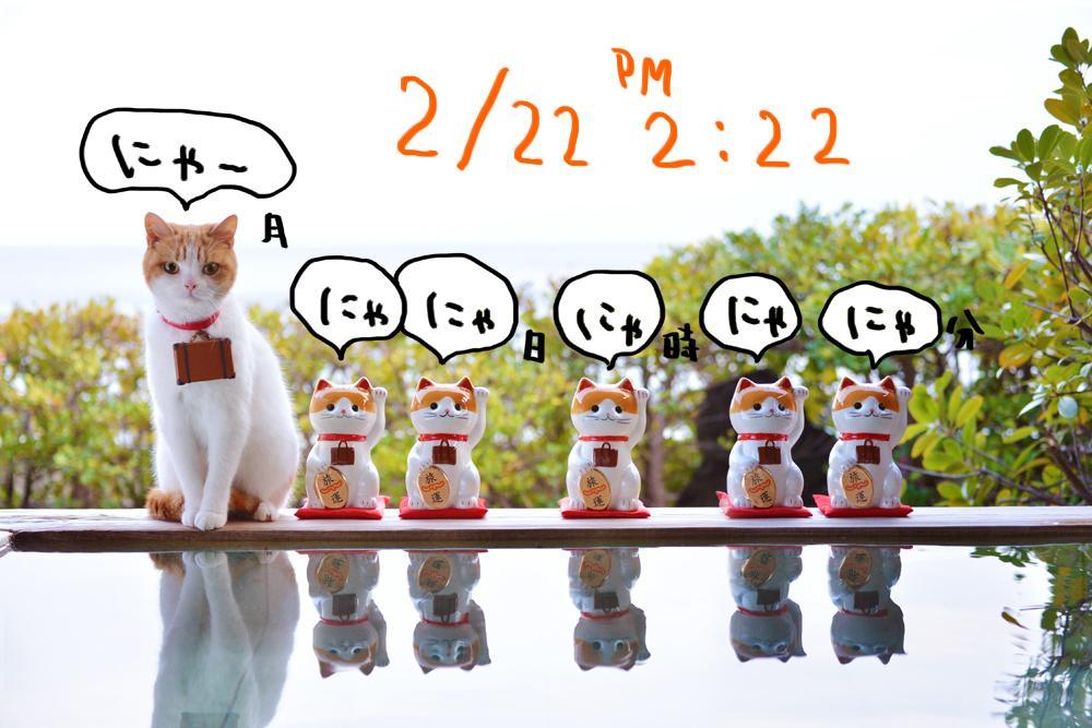 にゃー!#猫の日 #2月22日2時22分のにゃー #2月22日22時22分のにゃー http://t.co/KyokU1YbbW