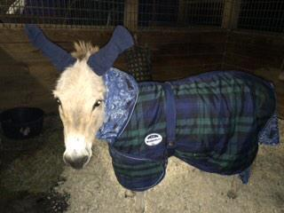 My friends pet donkey Walter weathering 27 degree temps with a homemade fleece & socks (on his ears!) @TODAYshow http://t.co/iKXGxE15Zd