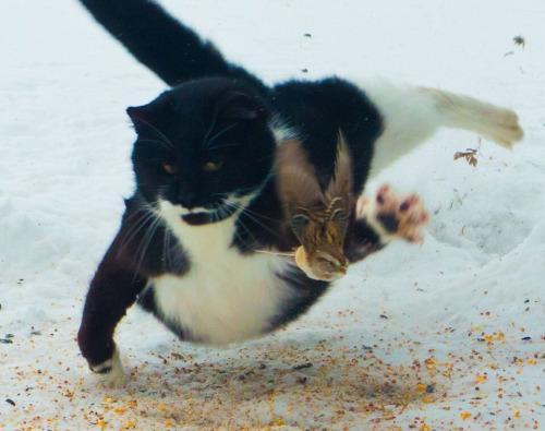 Woozy Cat on Twitter: