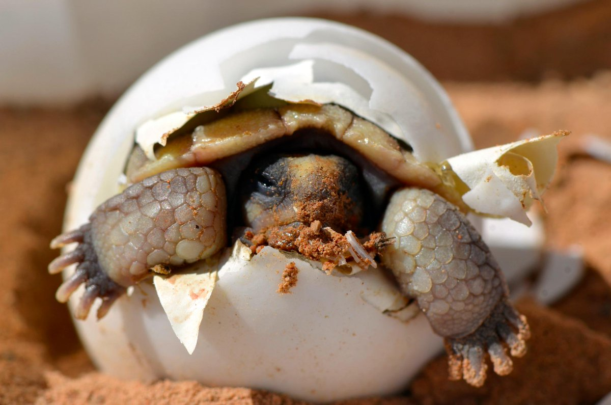 Images Via Here Here Here: Here's Something You Don't See Every Day: Baby Desert
