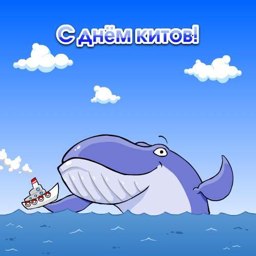 Пожелание, с днем дельфинов открытки