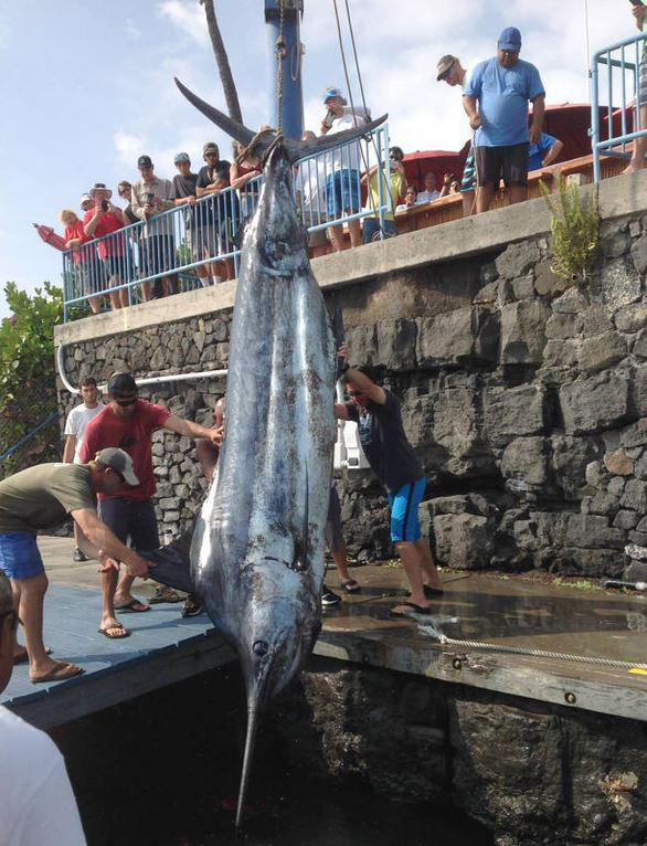 Holy marlin! NYC teen catches 1,000-pound blue marlin http://t.co/6l9HY7VLKD http://t.co/y5Jt1pP5N1