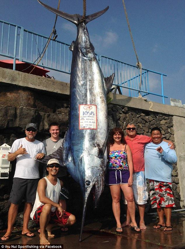 """@KieronKieronsk : Brooklyn teen hauls in 11-foot, 1,000 pound blue marlin off Hawaii http://t.co/3hVxP2DpXP http://t.co/ALm38aVECi"""
