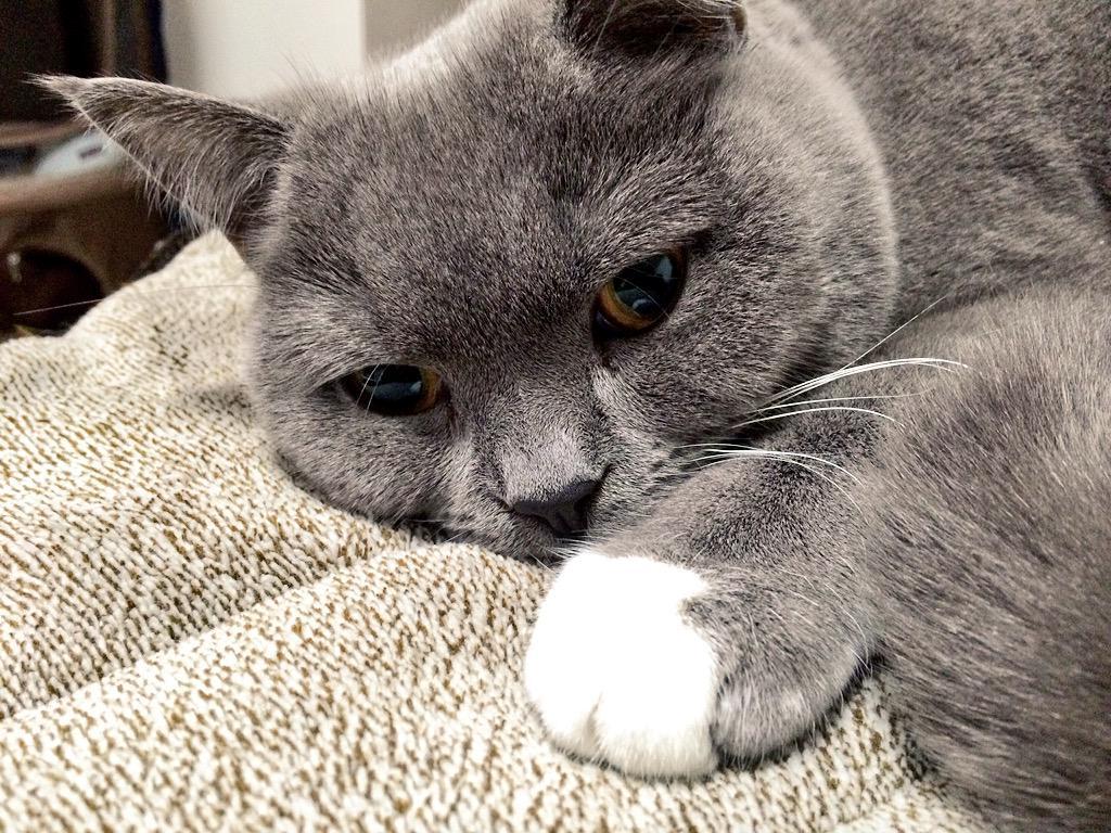 #猫の日 だよー!うぶちゃーん! pic.twitter.com/8aKeJl14Mp