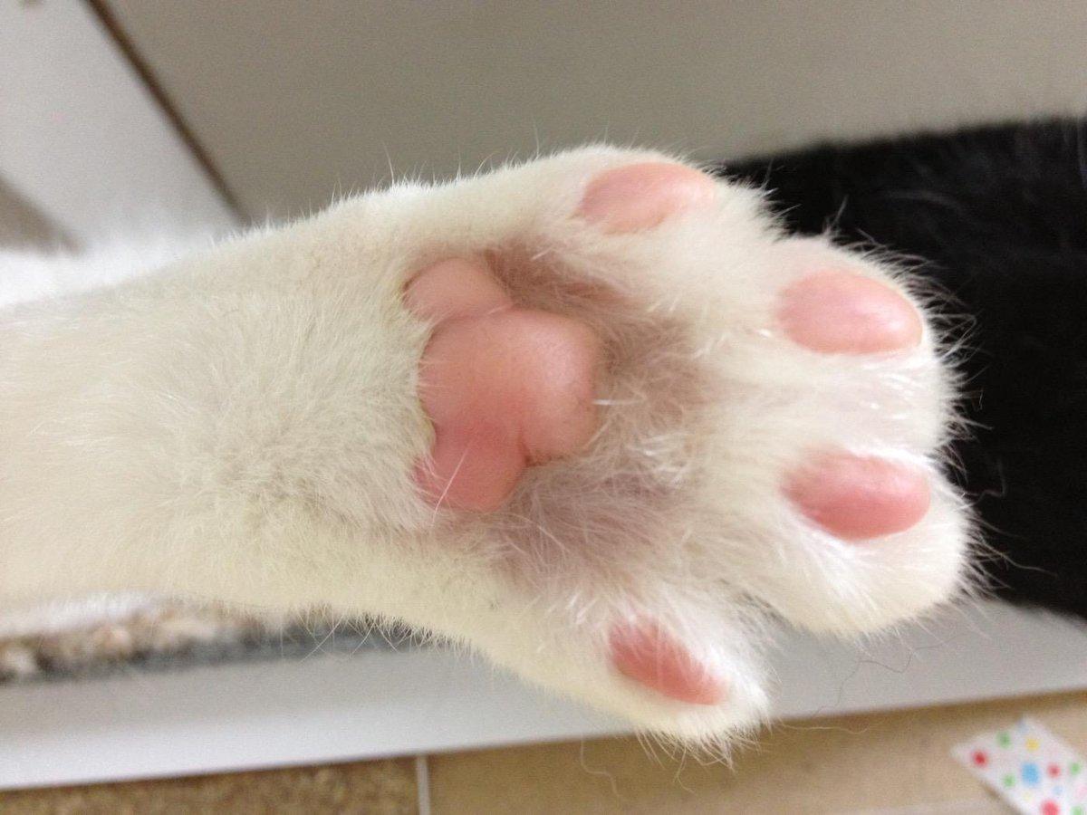 猫の日おめでとうございます。すべての猫たちが幸せに暮らせますように! #猫の日 pic.twitter.com/Lrsz57NSBW