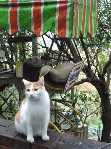 2月22日は猫の日だそうなので、中の人の猫フォルダから哲学の道で撮った猫をTL上に流しておきますね#猫 #猫の日 pic.twitter.com/ZBujTA8Kq4