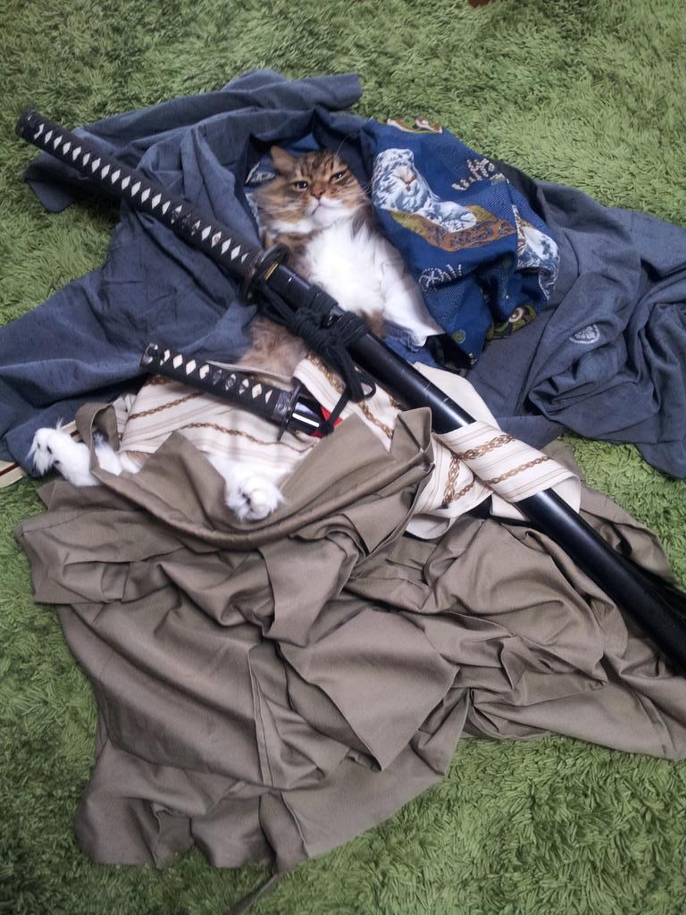 侍に化けてたけど変化が解けた猫 pic.twitter.com/mdw9BDFdrP