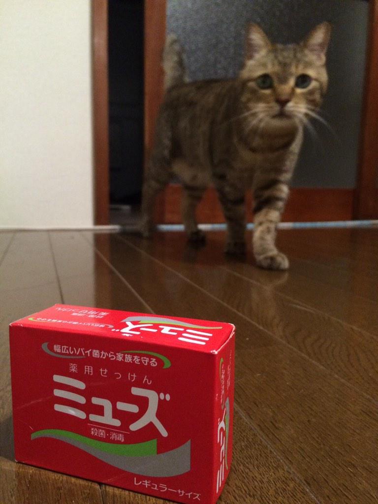 キャー///コッチ見た!コッチ見た! #猫の日 pic.twitter.com/ibDMJuiodd