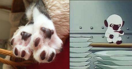 お友達の猫の肉球がアメディオにしか見えない! pic.twitter.com/4ATtMiCXn9