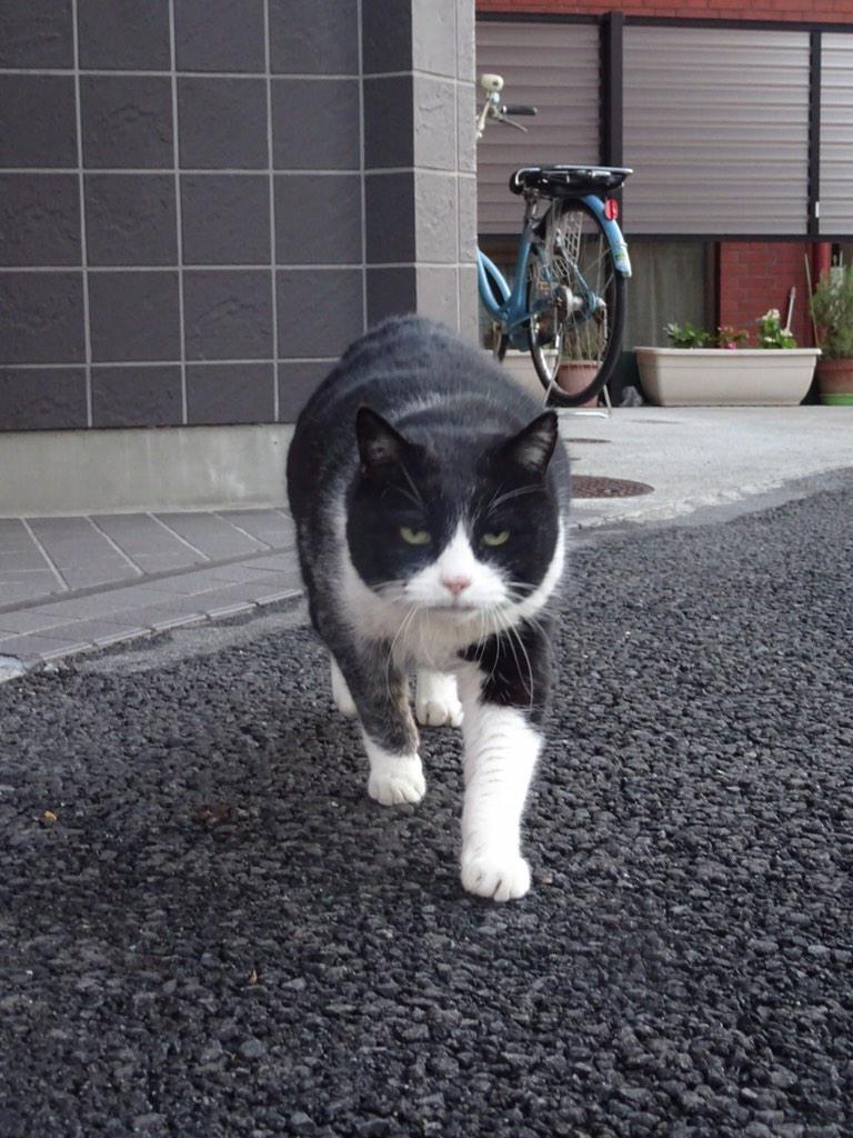 2月22日は猫の日。 pic.twitter.com/P8Oqira2Zl