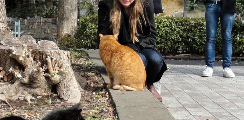 2020年を視野に入れ、上野公園内で海外観光客におもてなしの心を発揮するボランティアの姿です。ご査収ください。 #猫の日 pic.twitter.com/cEQZqKA60x