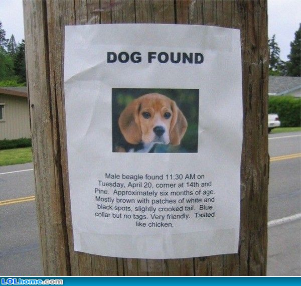 Funniest sign I've ever seen about a lost dog. I REALLY LOLed. #funny http://t.co/uOJ9uQA4II
