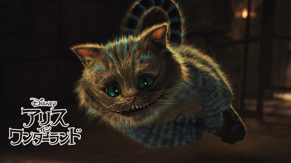 ニャンニャンニャン(222)で、今日は猫の日!どの猫がすき? pic.twitter.com/twgypTCb9G