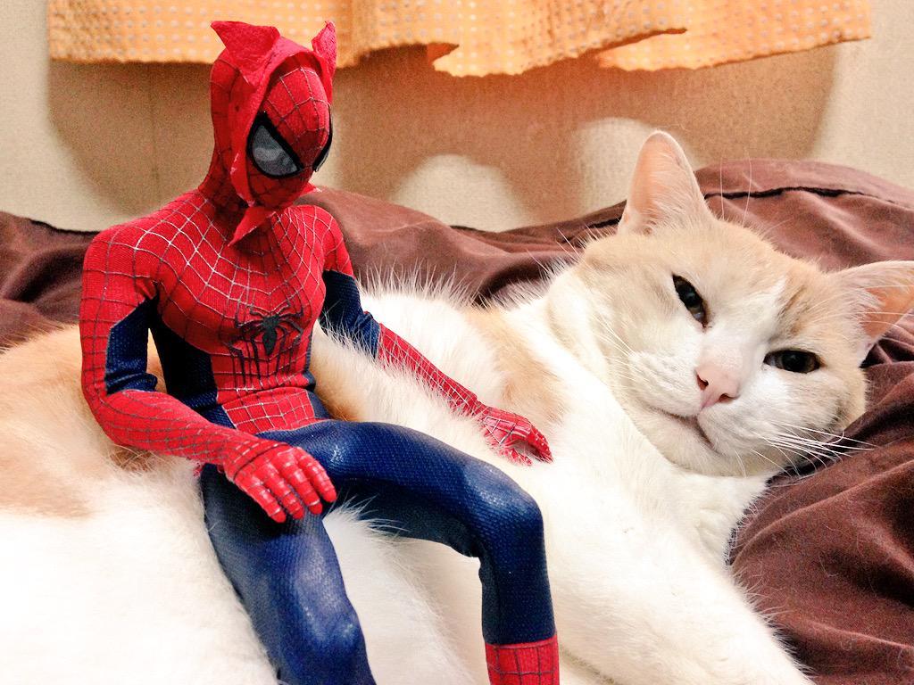 猫耳つけたけどなにかこう…チガウ…。アゴ紐のせい…? pic.twitter.com/N9iCsdTT8i