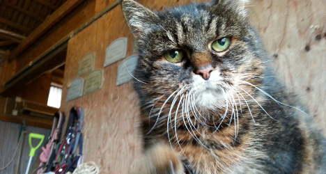 gato mais velho do mundo