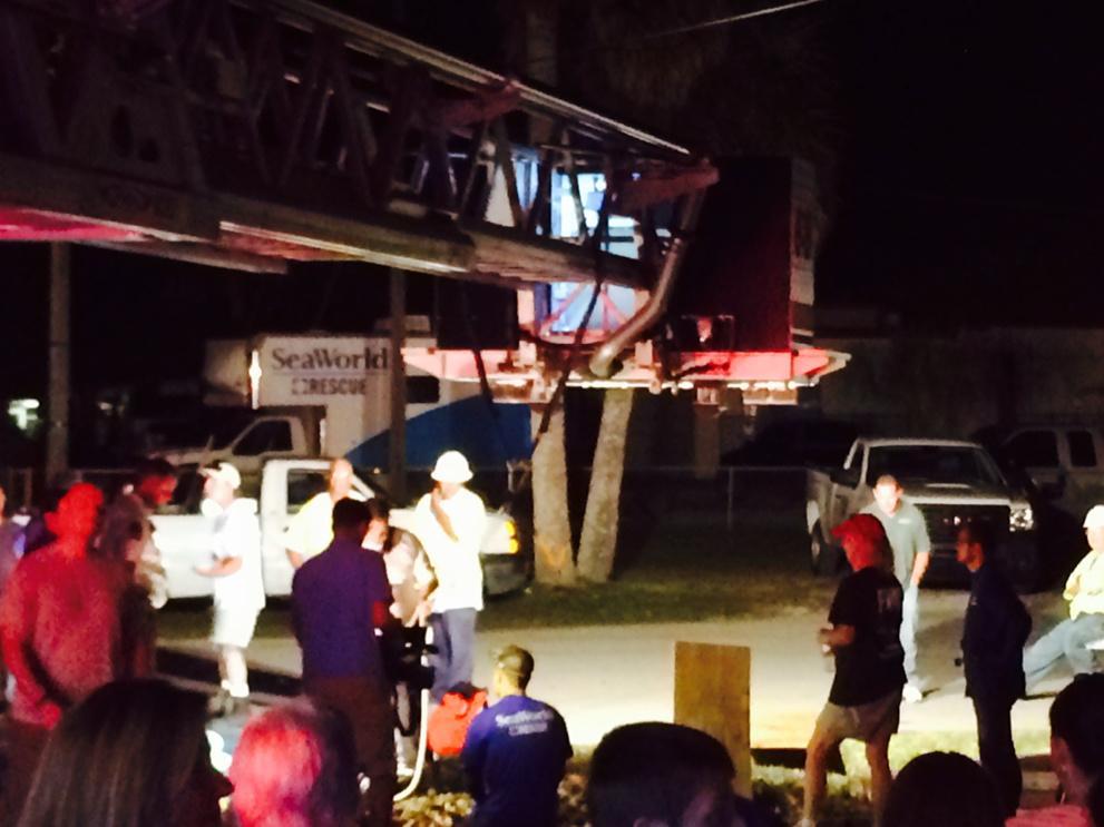 DEVELOPING: massive manatee rescue underway in Satellite Beach. #WFTV http://t.co/MHTFaBsSXG
