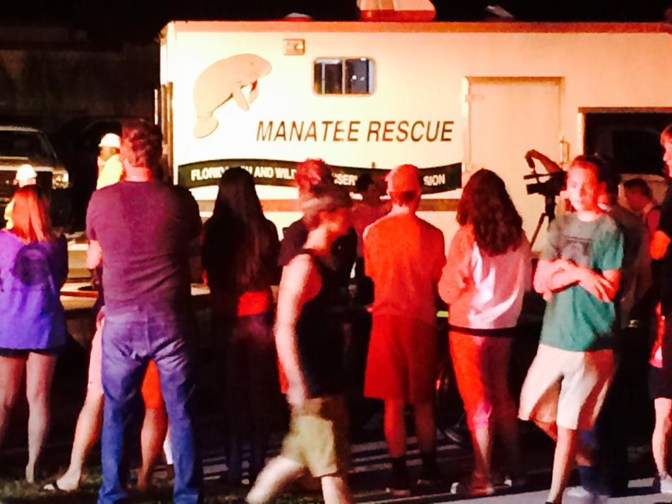 DEVELOPING: massive manatee rescue underway in Satellite Beach. #WFTV http://t.co/XqRZTrAlto