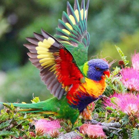 """If you truly love #nature, you will find #beauty everywhere"" #quote Boosts #mood. #vibrantcolors #birds #psychology http://t.co/oME8bLsnRp"