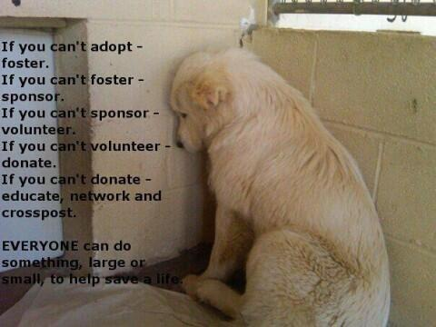"#AdoptDontBuy #RT ""@vitali_giuseppe: ❤❤❤ AdoptDontShop ❤❤❤ 