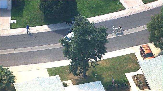 LLAMA WATCH: The chase is still on! Llamas on the loose in Phoenix. WATCH LIVE: http://t.co/wsQoRGGcfI #abc15