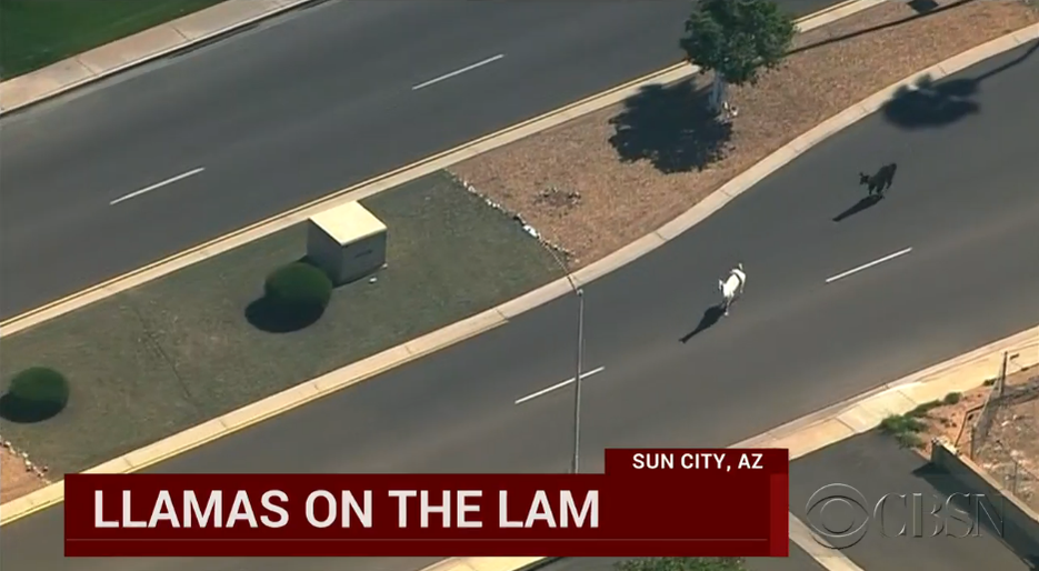 Llama headlines... Someone in Phoenix is having way too much fun. #news #sources http://t.co/fLyTdlG4GM