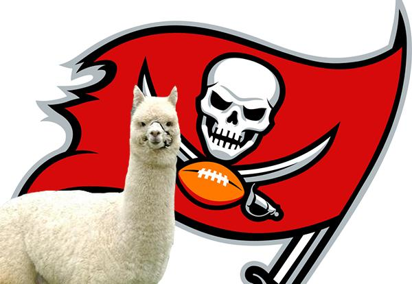 This LOL RT @CBSSports: And with their first pick of 2015 #NFLDraft ... The @TBBuccaneers pick the Llama. #llamadrama http://t.co/xPyYqFLBLJ