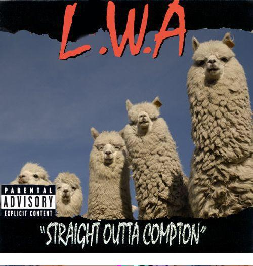 FTP!!! #LlamaDrama http://t.co/685oX0liQN