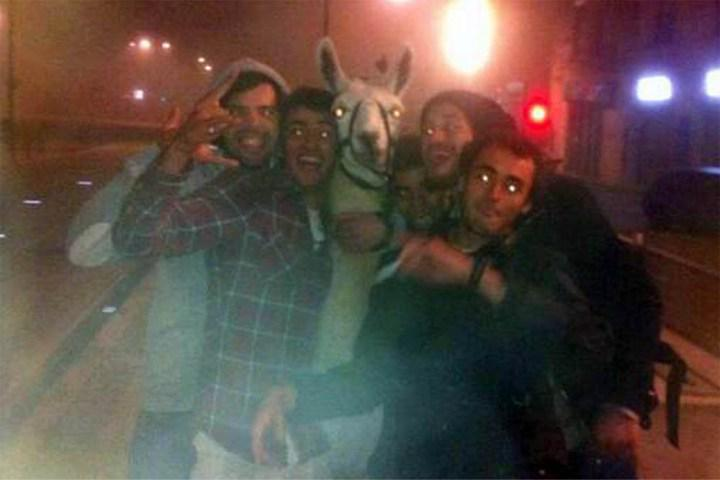 #TBT to 2013 when White Llama partied hard with these French dudes http://t.co/BVwc5w8Sij #LlamaDrama http://t.co/bnFy4HmTIJ
