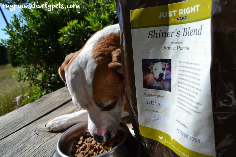 Τροφή ''ραμμένη'' στα μέτρα του σκύλου σας...