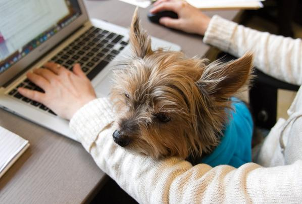 Cuddle break! This is Max, our founder @adameskin's dog & #DigInn's mascot. –Margo, @diginn #dogfriendlyoffice http://t.co/MjKSc708kB